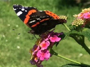 mariposa intensa