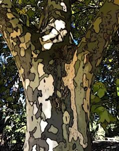 tronco mindfulness